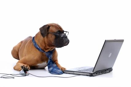 Art.12-chien-dressage-ordinateur